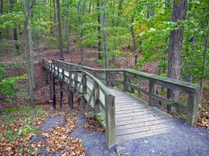Wooden foot bridge in the woods.